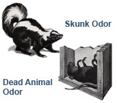 skunk and dead animals
